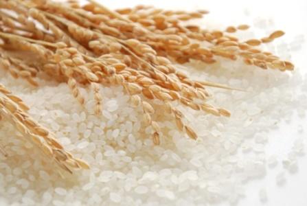 สารสกัดข้าว Young Rice Extract 100 cc.