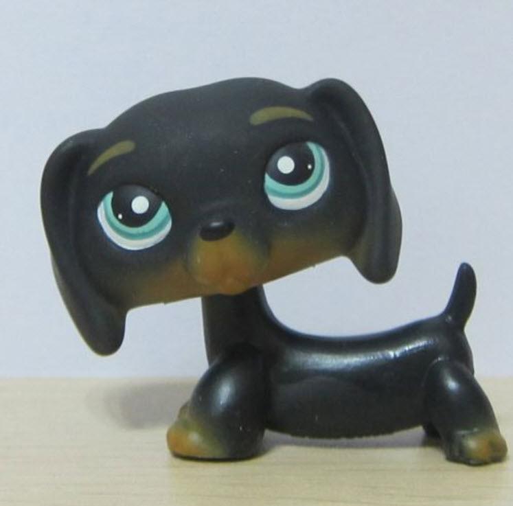 สุนัขดัชชุนด์สีดำ ตาสีฟ้า #325