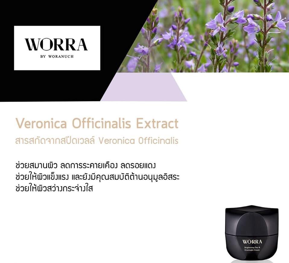 Veronica Officinalis Extract สารสกัดจากสปีดเวลล์ Veronica Officinalis (Speedwell) ช่วยสมานผิว ลดการระคายเคือง ลดรอยแดง ช่วยให้ผิวแข็งแรง และยังมีคุณสมบัติต้านอนุมูลอิสระ ช่วยให้ผิวสว่างกระจ่างใส